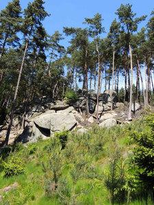 Charakteristika lesní správy
